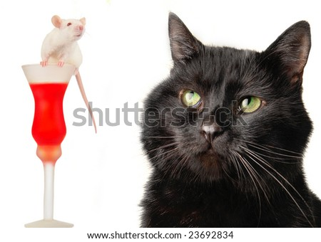 Black cat on a white background - stock photo