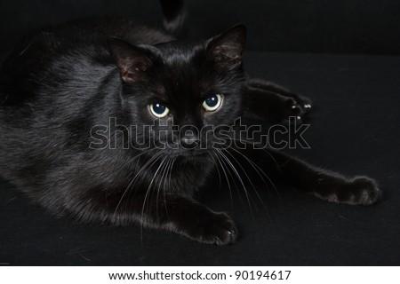 Black cat on black background - stock photo