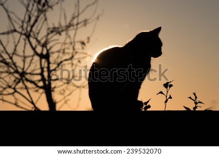 Black Cat outdoor and sunset - stock photo