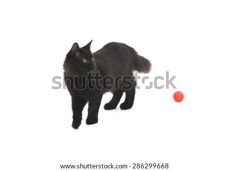 Black cat playing with a red ball against a white background - stock photo
