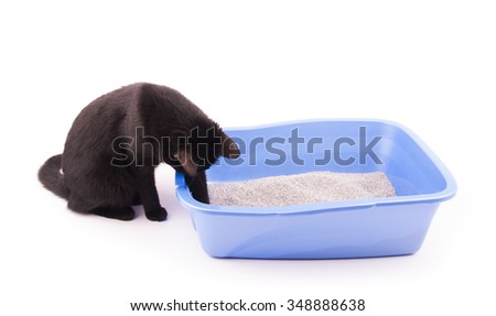 Black cat playing with sand in her litter box, on white - stock photo