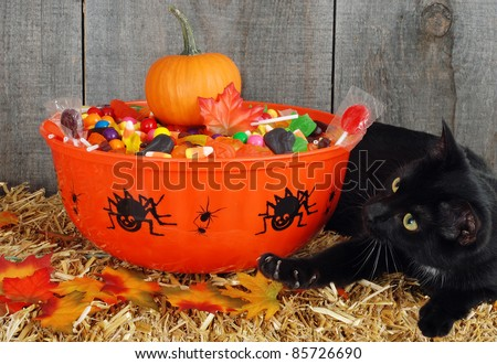 black cat protecting halloween candy - stock photo