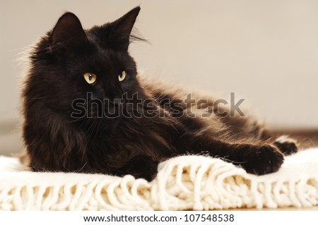 black cat relaxing in a white blanket - stock photo