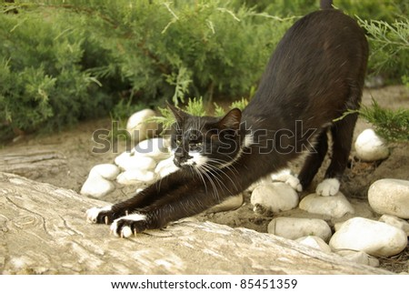 black cat sharpens its claws - stock photo