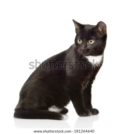 Black cat sitting and looking away. isolated on white background