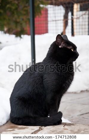black cat sitting on the snow - stock photo