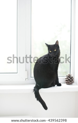 black cat sitting on the window