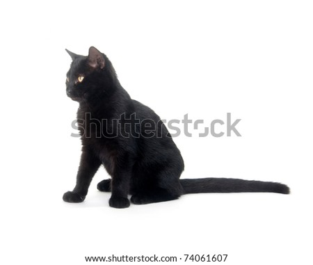Black cat sitting on white background