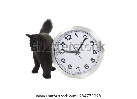 Black cat standing next to a clock against a white background