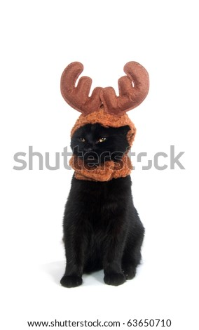 Black cat wearing a reindeer hat on white background - stock photo