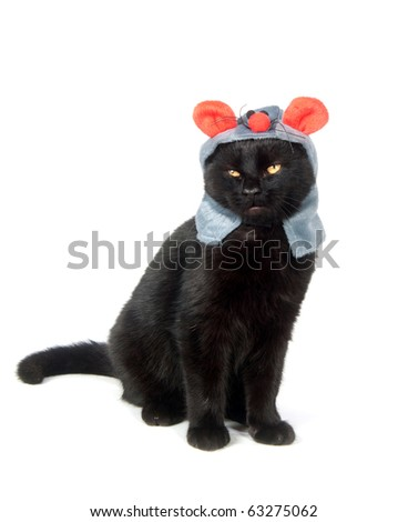 Black cat with a mouse hat on white background - stock photo
