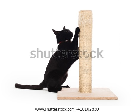 Black cat with a scratching post isolated on white - stock photo