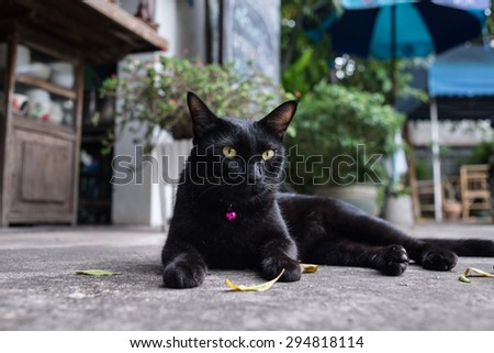 Black cat with big yellow eyes - stock photo