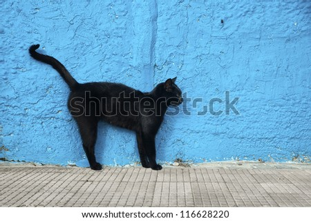 Black cat with blue wall background. Alert position. - stock photo