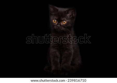 black cat with brown eyes sitting on a black background and stares toward