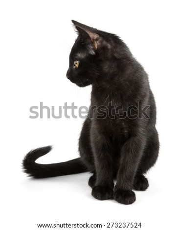 black cat with elegant tail - stock photo