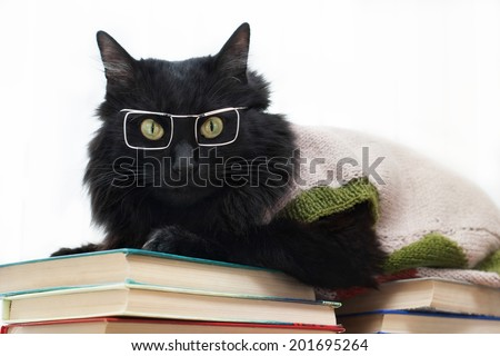 black cat with glasses lying on books and looking at camera on white background  - stock photo