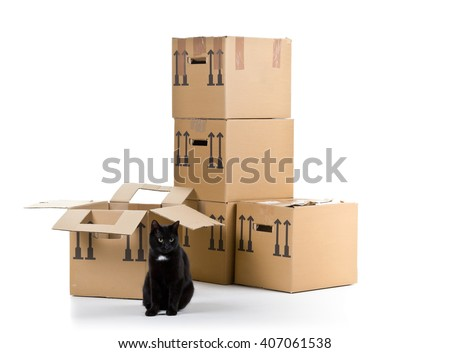 Black cat with stacked moving carton boxes over white background - stock photo