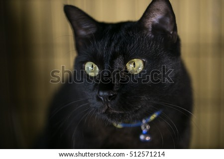 Black cat with yellow eye in the cage