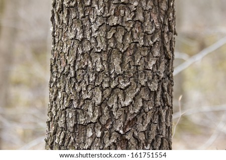 Black Cherry Bark - stock photo