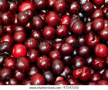 Black Cherry Stock Images, Royalty-Free Images & Vectors ...