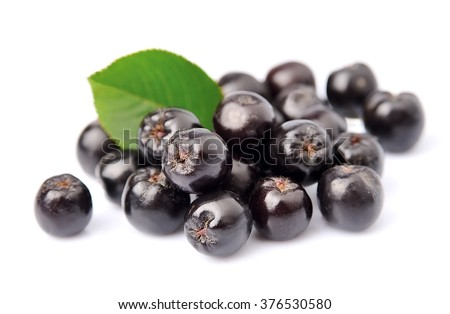 Black chokeberry with leaves close up. Black aronia berries. - stock photo