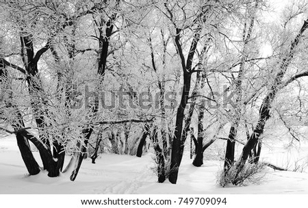 black contrasting winter trees among white snow