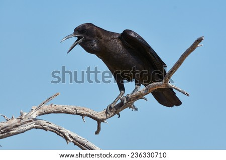 Black crow perched on a dead branch - stock photo