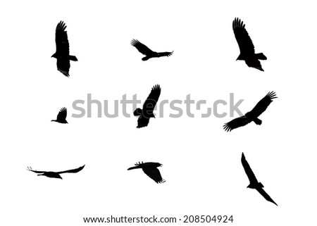 Black crows flying above on an isolated white background. - stock photo