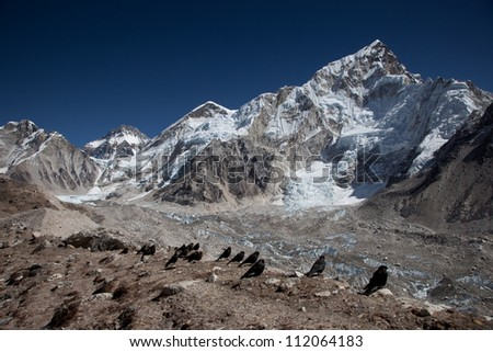 Black crows looking at Mt Everest range and Himalays and blue sky in Nepal , Gorak shep.