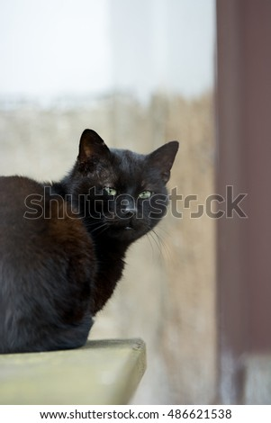 Black curious cat