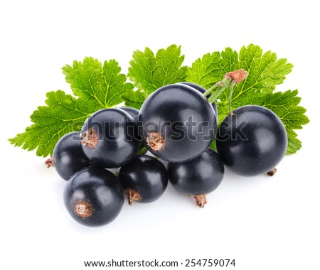 black currant berry isolated on white - stock photo
