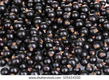 Black currant close-up