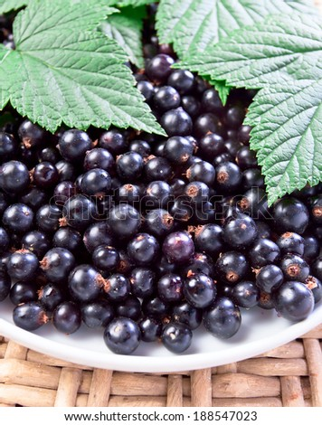 black currant, ripe berries and green leaves on  white plate