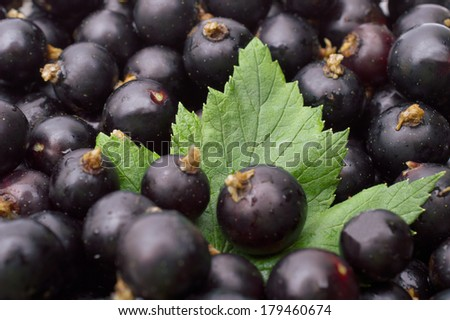 Black currant with leafs - stock photo