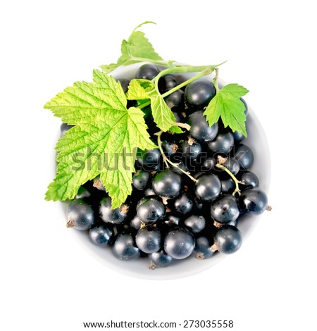 Black currants in a white bowl with green leaf isolated on white background top - stock photo