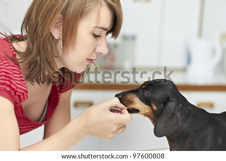 Black Dachshund dog receiving a treat from young lady owner - stock photo