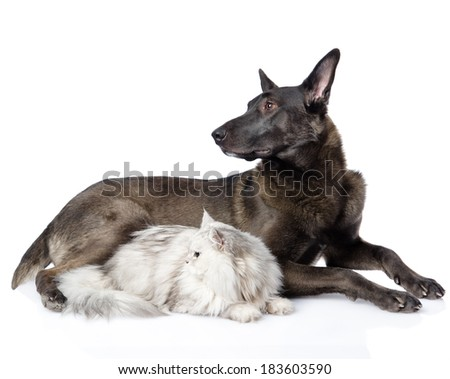 Black dog and persian cat looking away together. isolated on white background