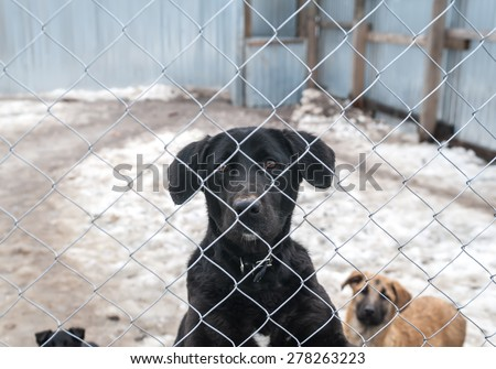 Black dog and puppies are behind metal silver grid in shelter