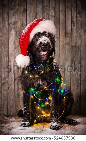 Black dog in santa outfit on wooden background.