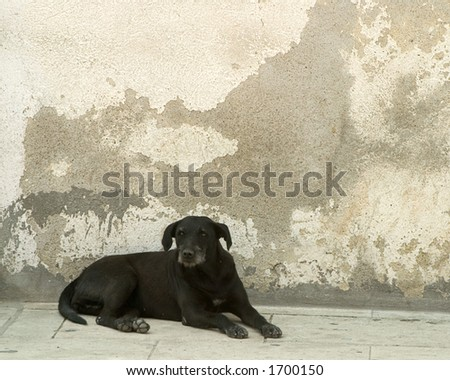 Black dog in the street in Mexico