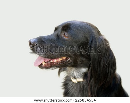Black dog profile, face - stock photo