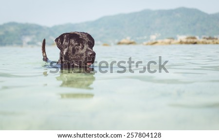 black dog swimming in the sea. concept about animals and nature, - stock photo