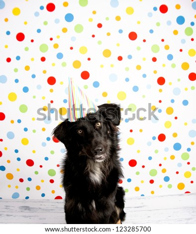 Black Dog Wearing Striped Party Hat - stock photo