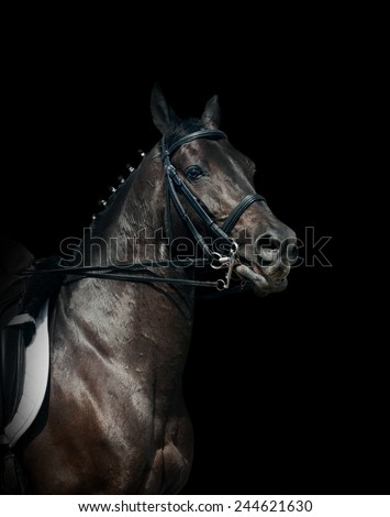 Black dressage horse - stock photo