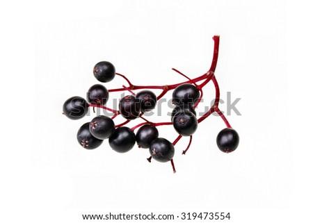 Black elderberry  fresh fruit isolated - stock photo