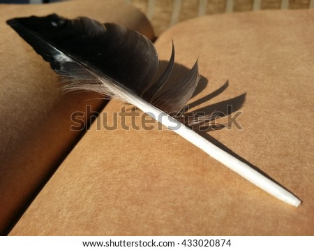 Black feather on old paper