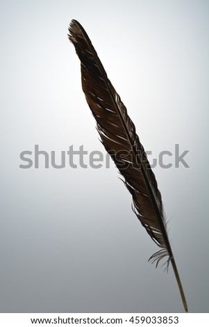 Black feather on the light