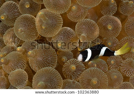 Black Fish - stock photo
