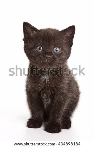 Black fluffy kitten looking at the camera (isolated on white) - stock photo